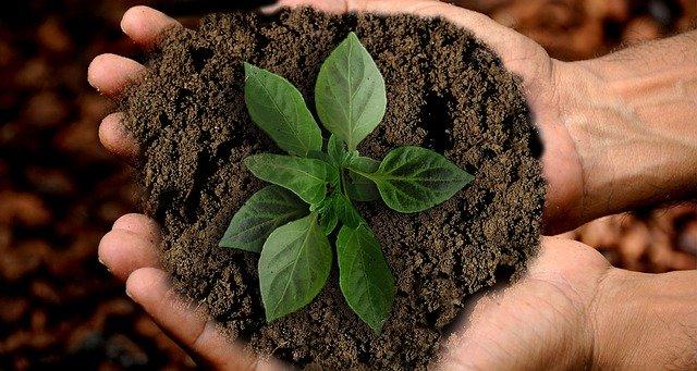 investeren in groene projecten. hoe kan dat?